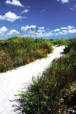 A Sandy Pathway II by Alan Hausenflock