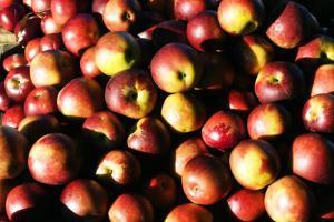 Apples by Alan Hausenflock