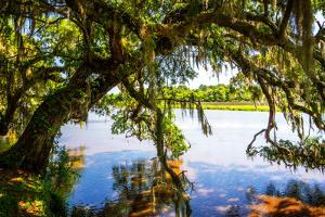Ashley River Bank III by Alan Hausenflock