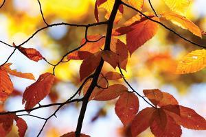 Autumn Leaves 4 by Alan Hausenflock