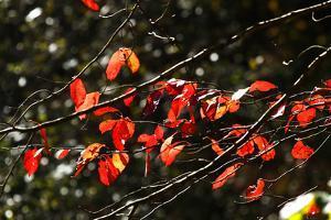 Autumn Leaves 5 by Alan Hausenflock