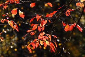 Autumn Leaves 6 by Alan Hausenflock