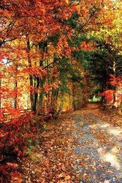 Autumn Pathway by Alan Hausenflock
