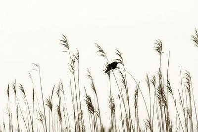 Bird in the Grass 2