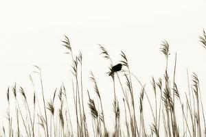 Bird in the Grass 2 by Alan Hausenflock