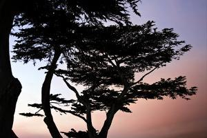 Cypress Silhouette I by Alan Hausenflock