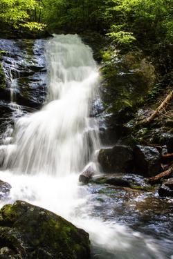 Deep Woods Waterfall I by Alan Hausenflock