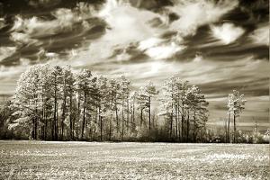 Fallow Field by Alan Hausenflock
