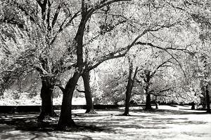 Fantasy Oaks BW by Alan Hausenflock