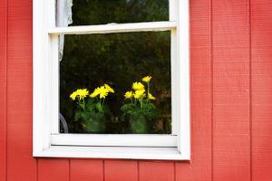 Flowers in a Window II by Alan Hausenflock