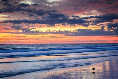 Gulls on the Shore II