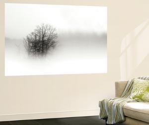 In the Mist II by Alan Hausenflock