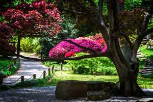 Japanese Garden III by Alan Hausenflock