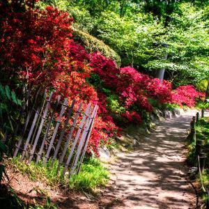 Japanese Garden VI by Alan Hausenflock