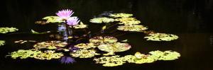 Lake Lilies I by Alan Hausenflock