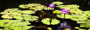 Lake Lilies II by Alan Hausenflock