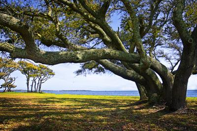 Live Oaks by the Bay II by Alan Hausenflock