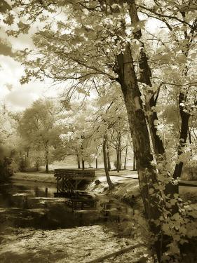Mint Springs Lake I by Alan Hausenflock