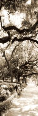 Savannah in Sepia II by Alan Hausenflock