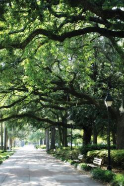 Savannah Sidewalk I by Alan Hausenflock