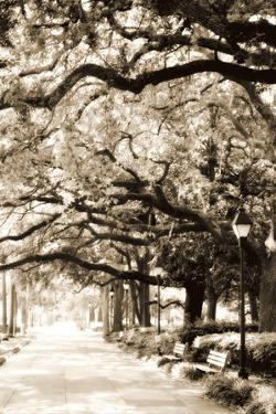 Savannah Sidewalk Sepia I by Alan Hausenflock