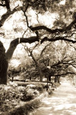 Savannah Sidewalk Sepia II by Alan Hausenflock