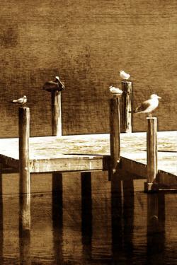 Sea Birds II by Alan Hausenflock