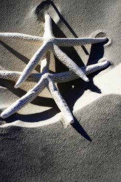 Sea Stars I by Alan Hausenflock