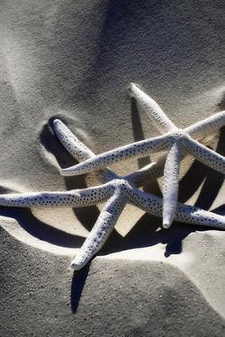 Sea Stars II by Alan Hausenflock