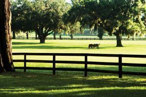 Serene Horses 1 by Alan Hausenflock