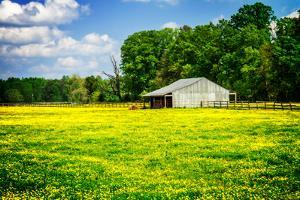 Spring Pasture I by Alan Hausenflock