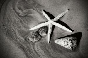 Tracks of the Tide II by Alan Hausenflock