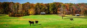 Virginia Horse Farm I by Alan Hausenflock