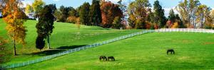 Virginia Horse Farm II by Alan Hausenflock