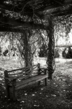 Winter Arbor I by Alan Hausenflock