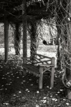 Winter Arbor II by Alan Hausenflock