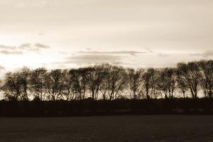 Winter Sunset Sepia II by Alan Hausenflock