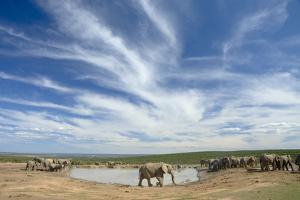 African Elephant Herd at Hapoor Waterhole by Alan J. S. Weaving