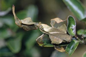 Praying Mantis Female by Alan J. S. Weaving