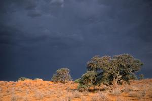 South Africa Thunderstorm, Red Dunes and Camelthorn by Alan J. S. Weaving