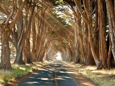 Cypresses by Alan Klug