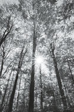 Autumn Forest I by Alan Majchrowicz