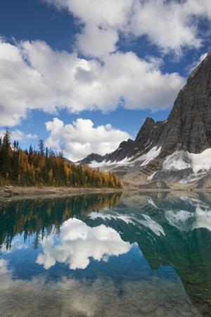 Floe Lake Reflection I by Alan Majchrowicz
