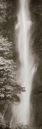 Multnomah Falls Panel by Alan Majchrowicz