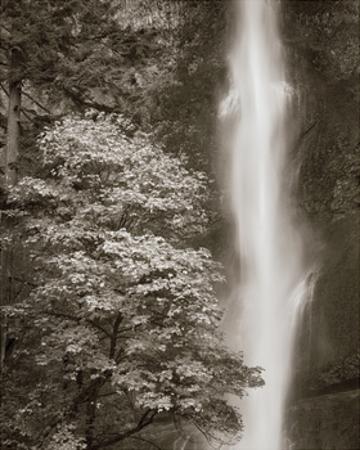 Multnomah Falls by Alan Majchrowicz