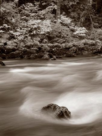 Nooksack River North Cascades Crop by Alan Majchrowicz