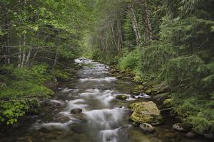 USA, Washington State. Beckler River, Mount Baker Snoqualmie National Forest. by Alan Majchrowicz