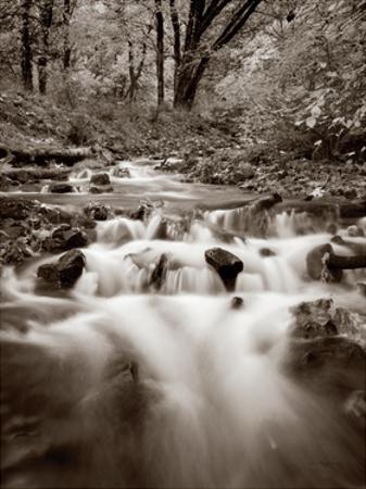 Wahkeena Creek Crop by Alan Majchrowicz