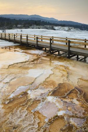 Yellowstone National Park by Alan Majchrowicz