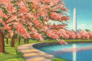 Washington Dc by Alan Paul